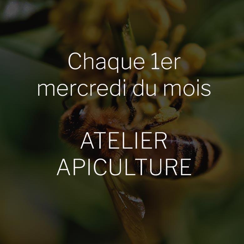 Les ateliers apiculture à l'Écomusée de Plouigneau