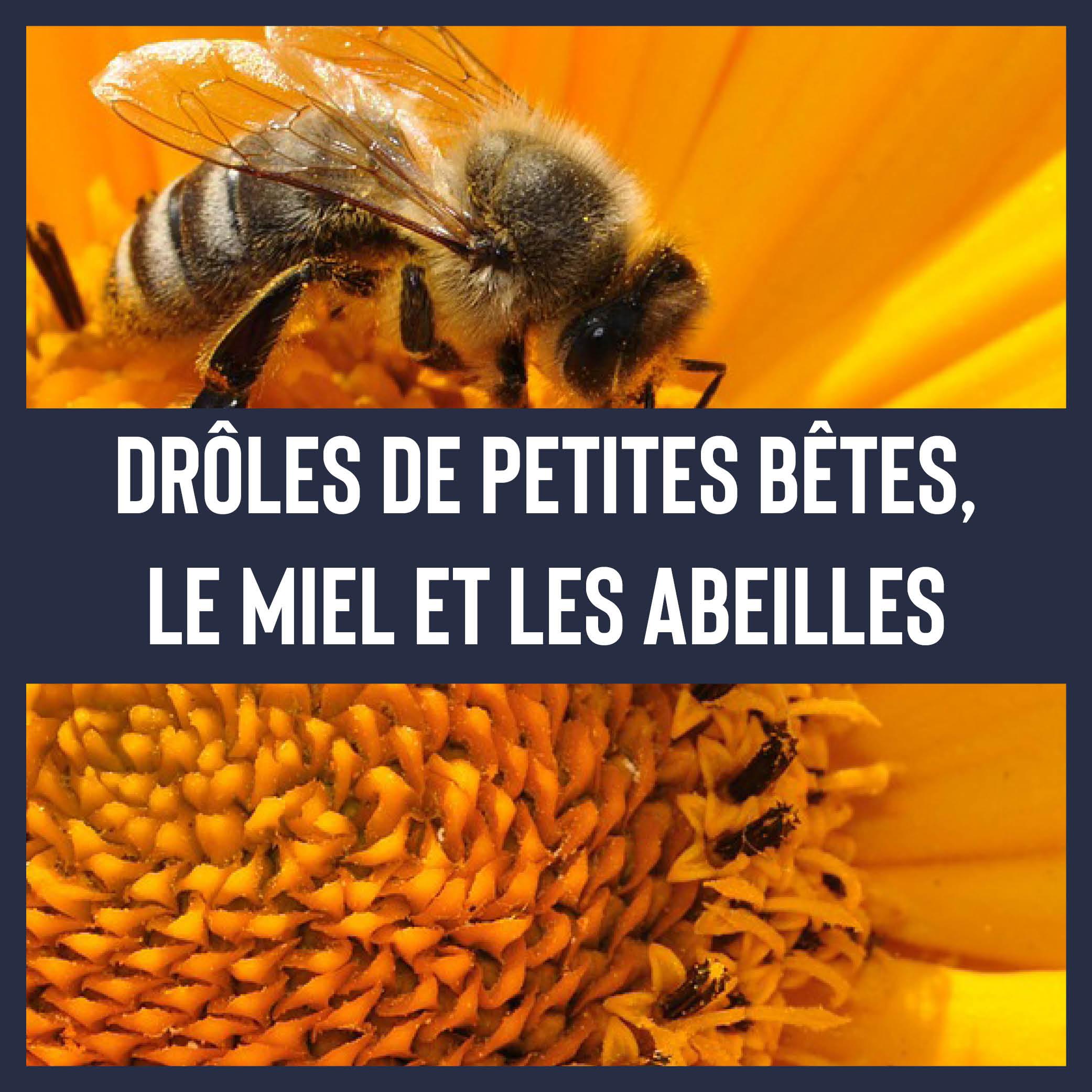 Le miel et les abeilles !